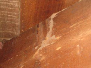 Termites 002